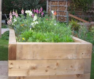 beautiful flowers in the raised beds